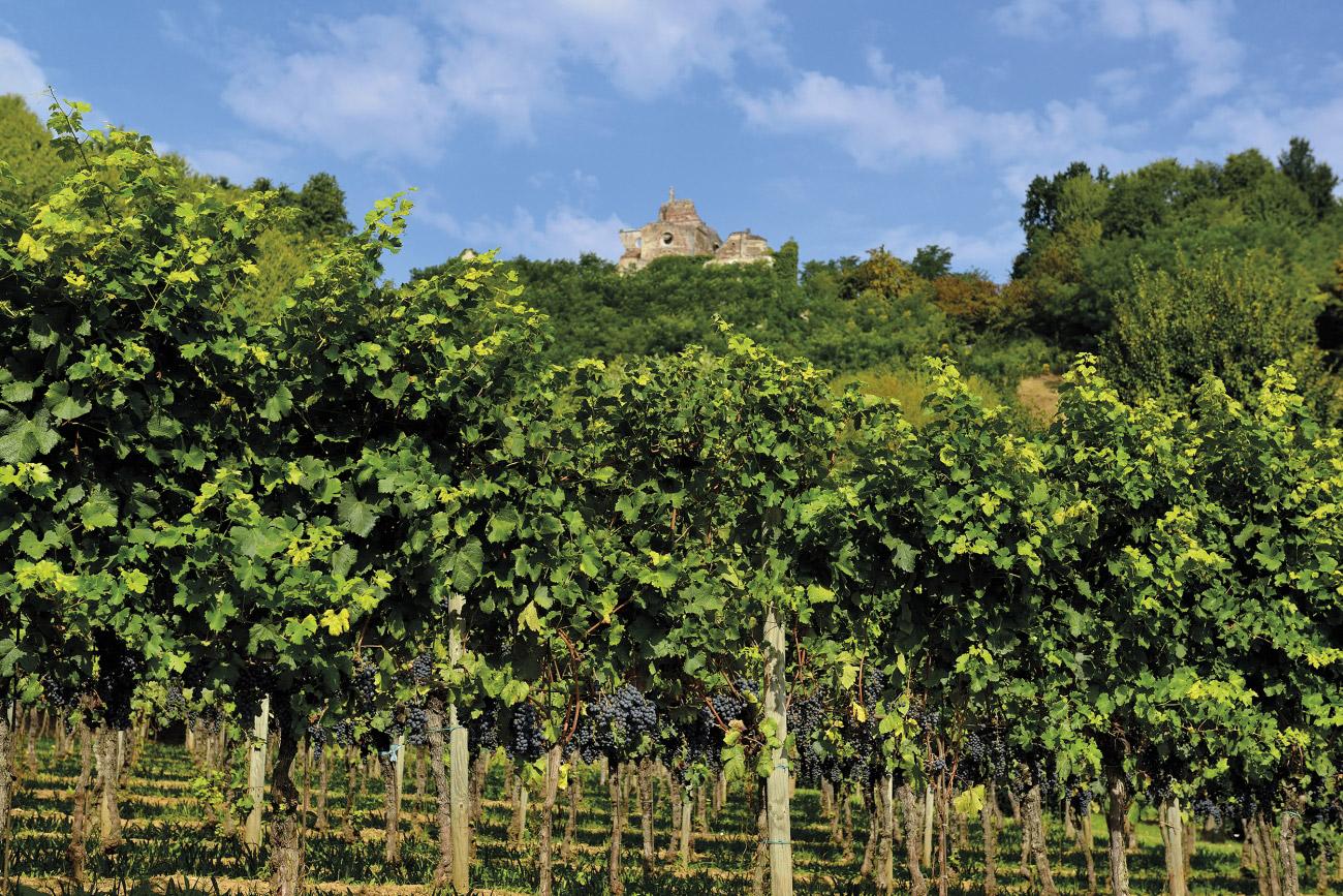 Montello, Colli Asolani und Umgebung